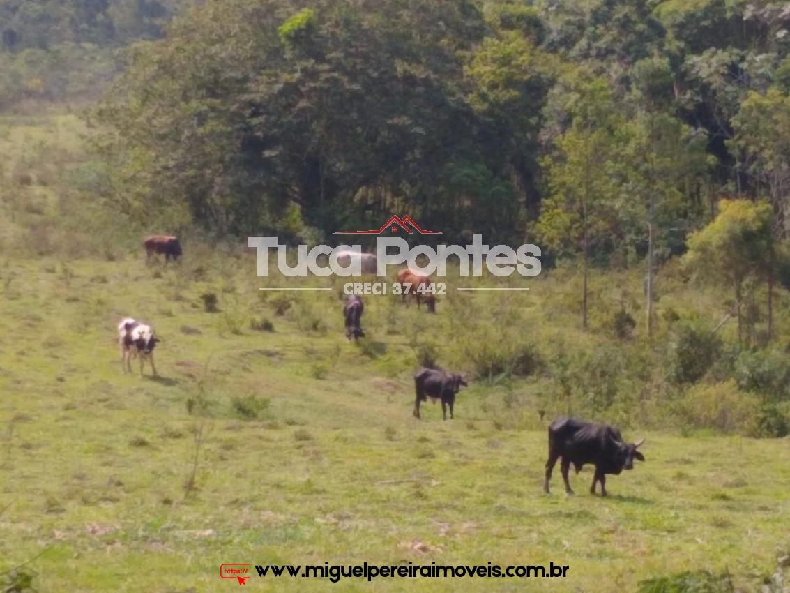 Fazenda com 18 Alqueires - Com sede, pastos, eucaliptos e alambique  | Código:F112